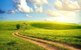 meadowroad